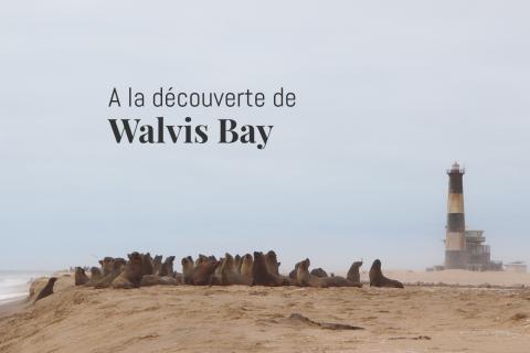 La colonie de phoques de Pelican Point